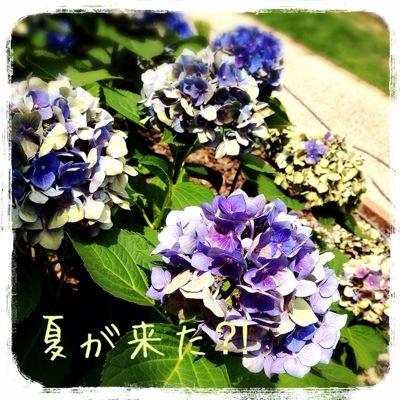 20140708-220042.jpg